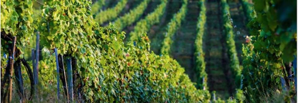 Gorgandin – Vinuri din inima Transilvaniei